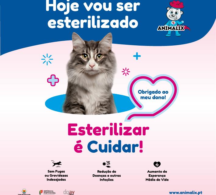 Município de Leiria: Abertas candidaturas ao Regime Especial de Esterilização de Animais de Companhia (Canídeos e Felídeos)