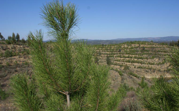 Ações de sensibilização sobre a floresta percorrem as freguesias do concelho