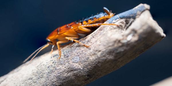 Do minúsculo ao gigante: todos têm um papel no Ecossistema