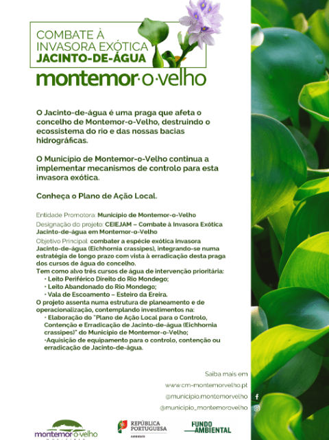 Combate ao Jacinto-de-Água em Montemor-o-Velho: Conheça o Plano de Ação Local