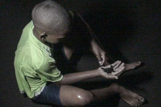 Tartaruguinhas fazem-se ao mar em Cabo Verde protegidas por voluntários