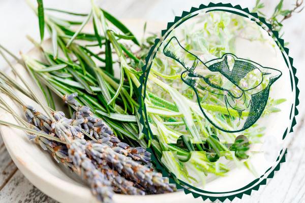 Proença-a-Nova   Dia Internacional da Alimentação com Rota das Aromáticas e Oficina do BioAromas