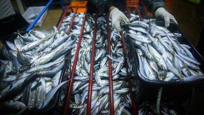 GNR apreendeu mais de três toneladas de sardinha em Aveiro e em Olhão