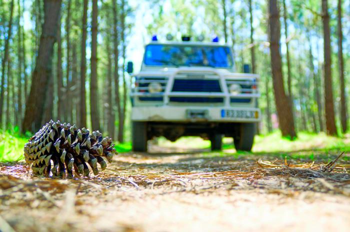 Oeste | Leiria com forte dispositivo no terreno para prevenção e combate a incêndios