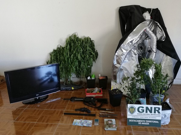 Desmantelada rede de tráfico de droga que operava em Anadia e Oliveira do Bairro