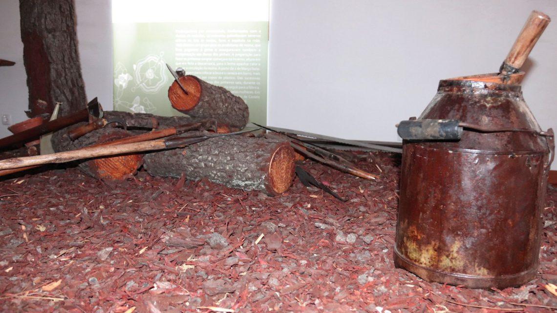 Proença-a-Nova | Centro interpretativo da resina nasce na aldeia de Corgas