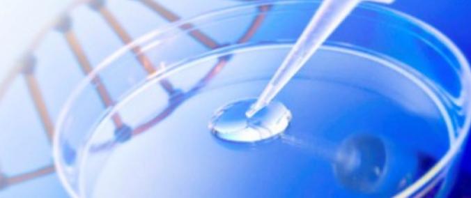Covid-19: Biotecnológica com sede em Cantanhede inicia testes de vacina em ratinhos