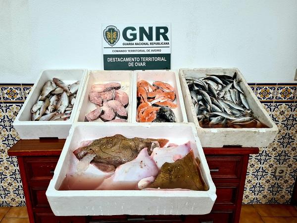 Apreendidos 22 quilos de pescado impróprio para consumo