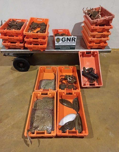 Mais de 90 quilos de pescado apreendidos na Nazaré
