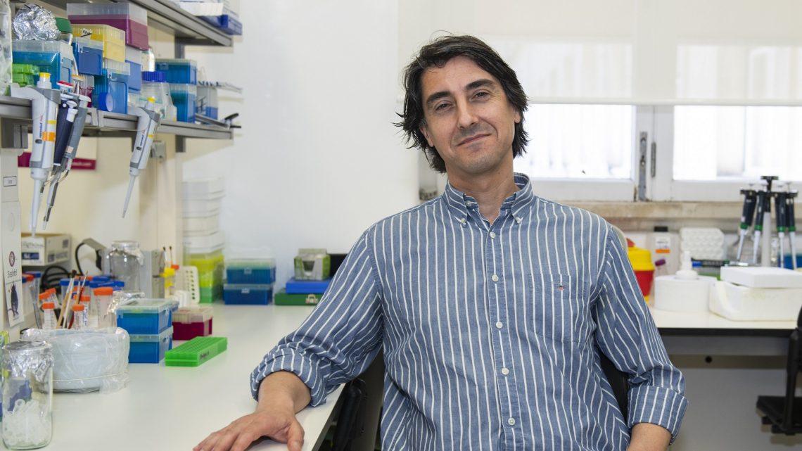 """Nanopartícula para combate ao cancro desenvolvida na UC obtém designação de """"medicamento órfão"""""""