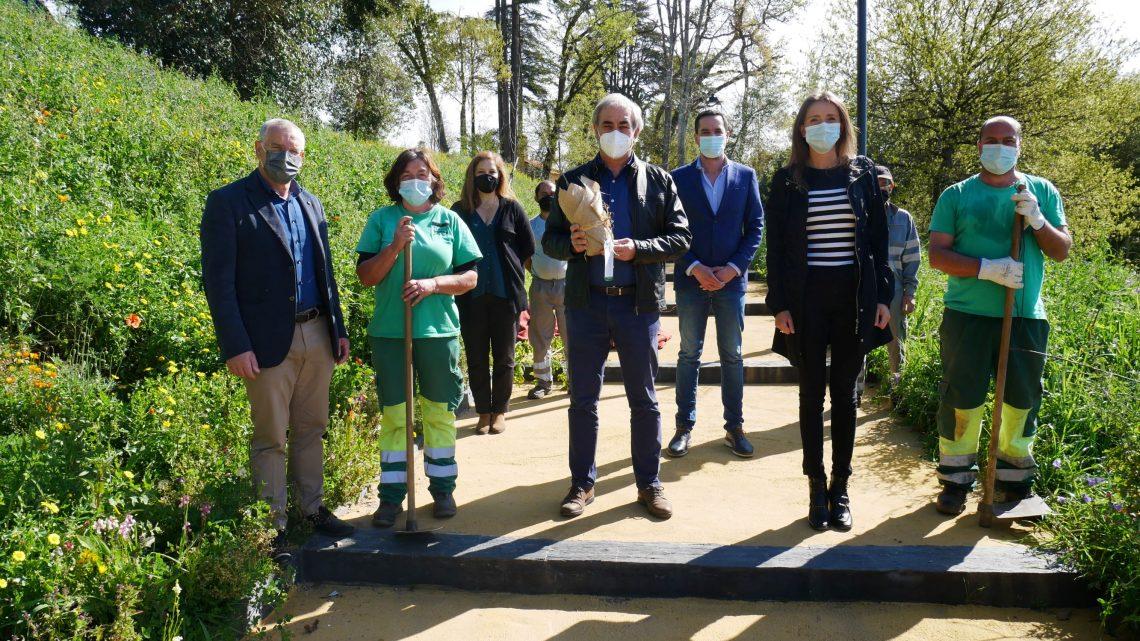 Câmara de Águeda plantou 7.150 árvores