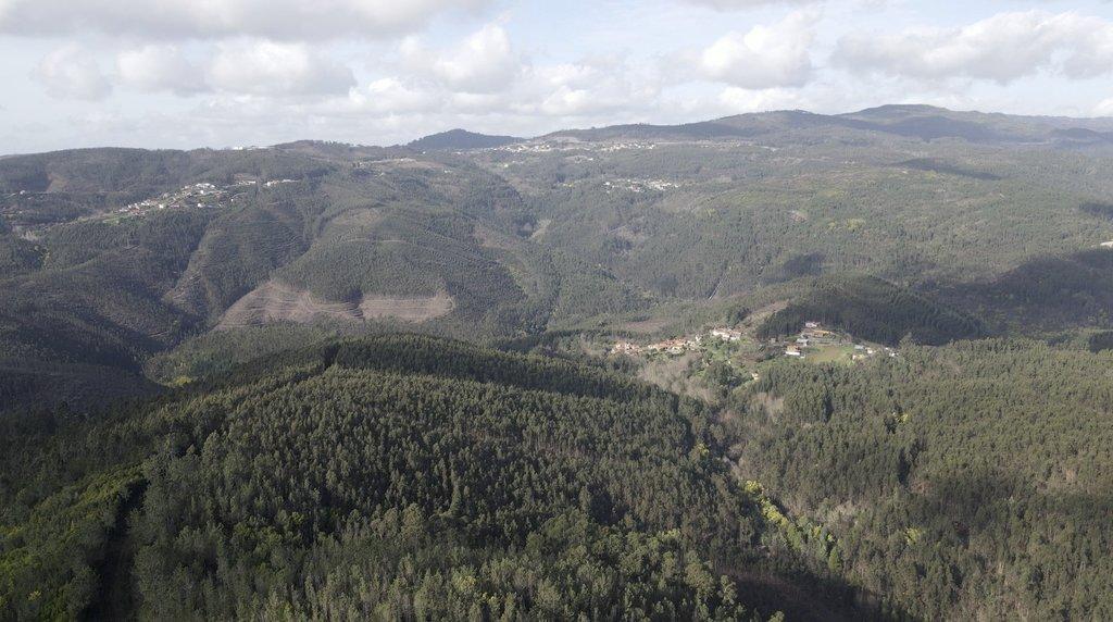 Plano Municipal de Defesa da Floresta Contra Incêndios de Águeda está em consulta pública