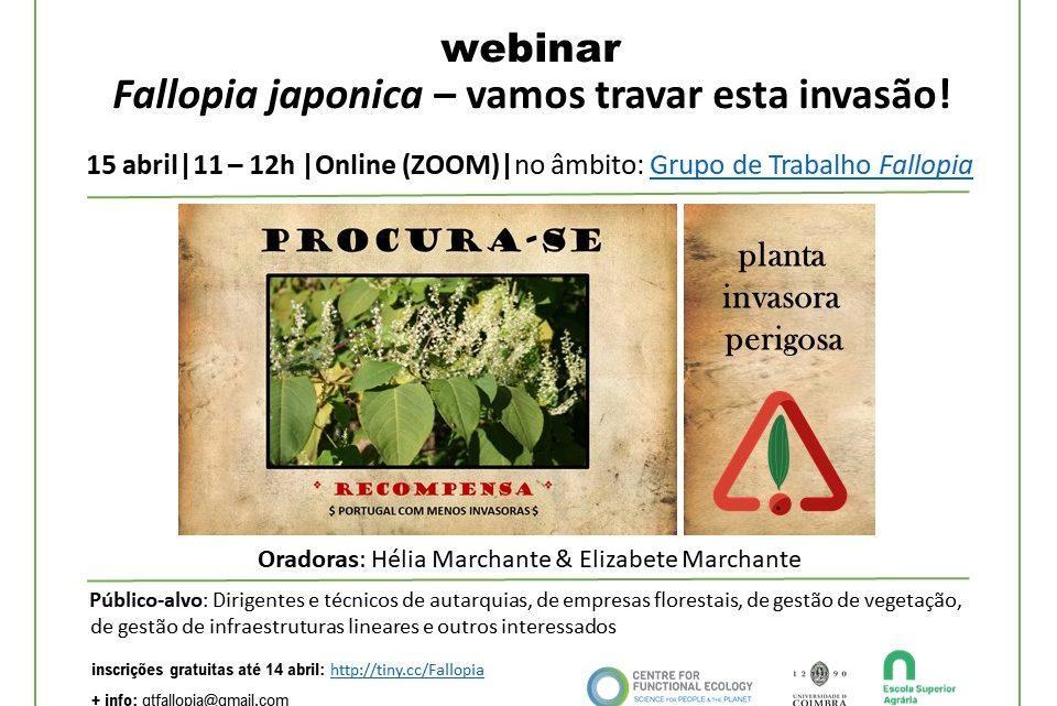 Escola Superior Agrária do Politécnico de Coimbra: Invasora Fallopia japonica é tema de webinar