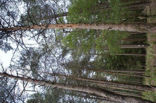 Coimbra | ESAC e ISEC desenvolvem aplicação para estimativa do volume das árvores