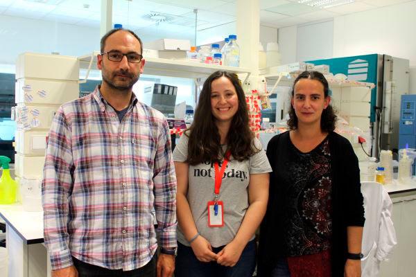 Coimbra | Cientistas descobrem novo mecanismo responsável pela disseminação da infeção pela bactéria Salmonella