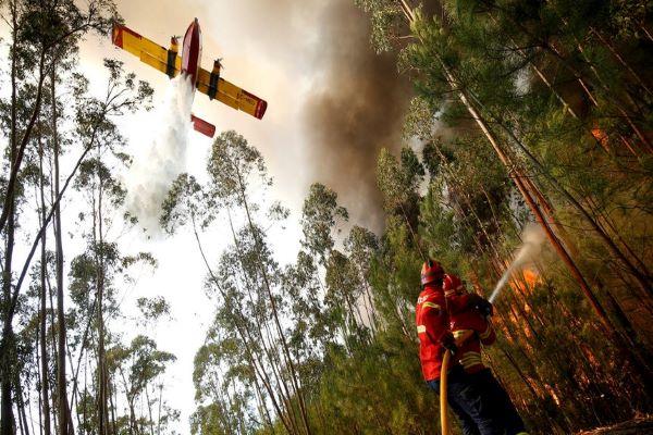Oito meios aéreos e 175 bombeiros combatem fogo na Sertã