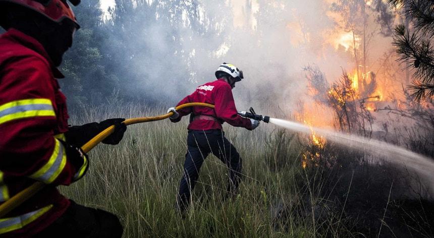 Fogo em Sabugal mobiliza 184 bombeiros