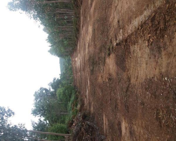 Águeda | Câmara Municipal está a reabilitar e a abrir caminhos na floresta do concelho