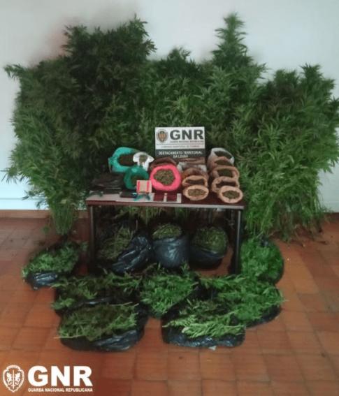 Detidos com mais de 4 500 doses de canábis na Pampilhosa da Serra